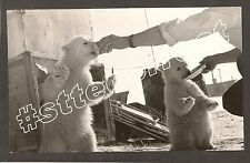 ++ Remarkable Press Photo Russia USSR Polar Bears AP NOVOSTI  Rare  / OFFER