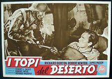 Cine-fotobusta I RATONES DE DESERTO burton,newton,mason,SABIO