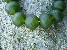 Strang Altglasperlen 25 mm Lemon Green - Recycled Glass Beads Ghana Krobo