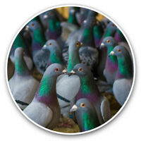 2 x Vinyl Stickers 10cm - Flock of Grey Green Pigeon Birds Cool Gift #24613