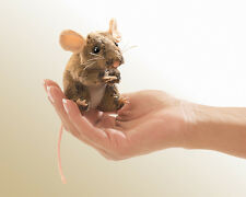 *NEW* PLUSH SOFT TOY Folkmanis 2652 Field Mouse Mice Finger Puppet