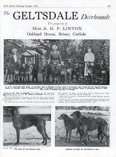 1954 Deerhound Dog Breed Kennel Advert Print Page Geltsdale Kennel