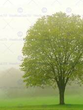 Arbre dans le brouillard photo art imprimé poster photo BMP434A