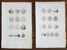 GRAVURE authentique 19° : vues microscopiques.(25 figures) Lithographies Pauquet