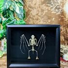 P3 Taxidermy Oddities Curiosities Bat Skeleton Display shadowbox display ES