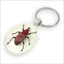 Fluorescent Acrylic Amber Cyrtotrachelus Longimanus Beetle Keyring Insect Keycha