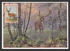 RUSSIA MK 1957 FAUNA HIRSCH WILD DEER MAXIMUMKARTE CARTE MAXIMUM CARD MC d7742