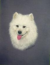 Original Pastel Drawing White Samoyed Dog Vignette Wildlife Art Porter Family