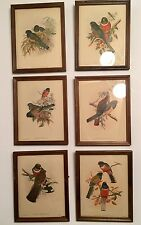 "Set Of 6  J Gould & H C Richter Lithograph  Birds  ""Trogon Elegans"" Framed"