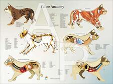 "Cat Internal Veterinary Anatomy Poster 18"" X 24"" Wall Chart"