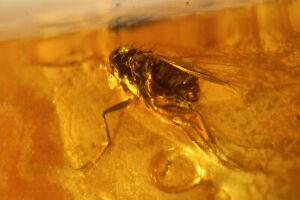 AT! V1208  BALTISCHER NATURBERNSTEIN MIT LANGBEINFLIEGE Inkluse amber