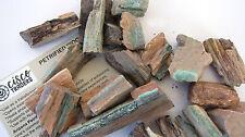 Petrified Wood Rough Stone 2.4oz B023-11 Healing Crystal Info Card Past LIfe