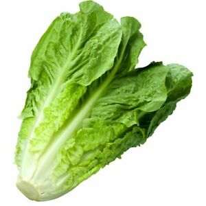 1200+ Lettuce Seeds - Romaine - Parris Island | Heirloom Non-GMO Garden Seeds