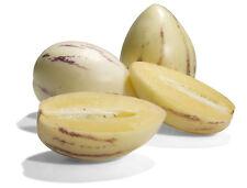 Pepino Dulce Melon Pear Solanum Muricatum Fruit Seeds 10 PCS EXOTIC! RARE!