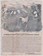RARE Letter w Graphic Van Raub 1884 Carlos Ranch Spotted Horses Leon Springs TX