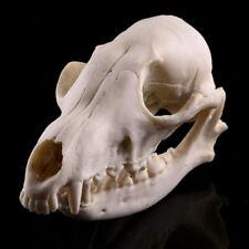 Wild Fox Skeleton Head Skull Halloween Statue Resin Animal Model 1:1 Life Size