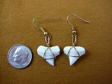 "(s806-10) 5/8"" Earrings pair GREAT WHITE SHARK TOOTH Teeth JEWELRY sharks modern"