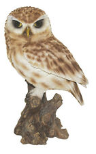 Vivid Arts - REAL LIFE BIRDS - Large Size Little Owl