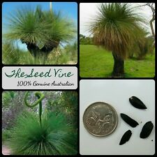 20+ BLACK BOY GRASS TREE SEEDS (Xanthorrhoea preissii) Balga Drought Native