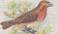 Vintage BDV tobacco cigarette silk - BIRD - CROSSBILL