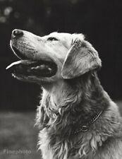 1987 Vintage BRUCE WEBER Golden Retriever Dog ROWDY Palomino Photo Art 16x20