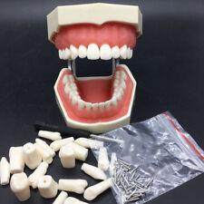 28pcs teeth removable tooth model Dental preparation detachable+Tooth Grain+pin
