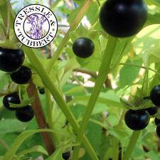 Rare Jaltomato Jaltomata procumbens Fruit 10 seeds UK SELLER