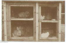 BM504 Carte Photo vintage card RPPC Animaux cage clapier lapin