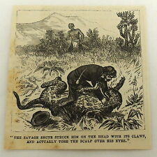 small 1878 magazine engraving ~ Leopard Attacks Man
