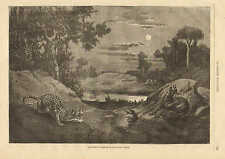 Algeria, Hunter Baits Panther, Leopard, With Goat 1870 French Antique Art Print,