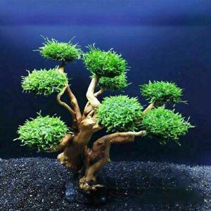1* Artificial Plastic Bonsai Pine Tree Aquarium Bonsai Ornament Fish Tank Decor