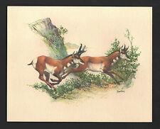 *Vintage* 1970's FREDERICK SWENEY Wildlife 3-D EMBOSSED Print ANTELOPE NOS