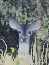 Deer Shadow Decoy Doe bow and arrow, deer hunting, motion, whitetail gun