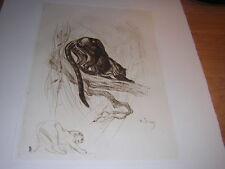 1948.eau forte Odette Denis.panthère noire.animaux