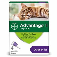 Advantage Ii 4-Dose Large Cat Flea Prevention, Flea Prevention for Large Cats.