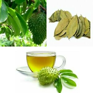Ceylon 50 Dried Soursop Leaves Graviola-Hojas De Guanabana/Organic/100% pure