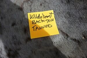 Blue Wildebeest Back skin tanned Taxidermy