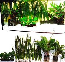 Pflanzenset Diskus  Aquarium