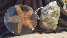 Decorative Shells (varied sizes - mostly small)  & 4 Decorative Starfish