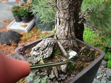 Ballbrause Gießball terra 250 ml lang 16 cm Bonsai Kakteen Orchideen Sämlinge
