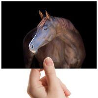 "Chestnut Horse Pony Equestria Small Photograph 6""x4"" Art Print Photo Gift #12507"