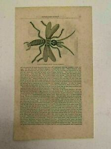 KP27) Domestic Roach Insect Entomology Harper's Monthly 1860 Engraving