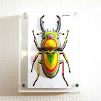 3D ART WALL DECOR STAG BEETLE RAINBOW RARE JAPAN ARTIST PAPER CRAFT 2019 F/S