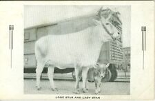 San Antonio TX Lone Star( Largest Milk Cow in the World) and Lady Star