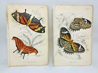 Jardine Hand Colored Engraved Butterflies Moths 1884 - Plate #14, #19