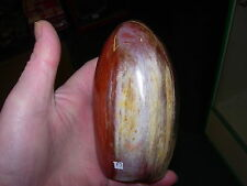 petrified wood polished free form P3