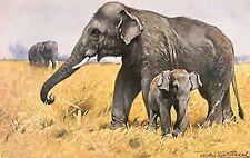 ELEPHANTS~counted cross stitch pattern #400~ANIMALS Wildlife Chart