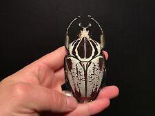 Entomologie / Insect / Insecte / Goliathus undulus 95 mm !!RARE!!