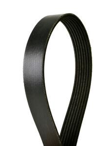 Serpentine Belt-Multi-V Continental Elite 4070962
