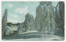 View & Portrait Co Postcard, Ice Trees at Niagara, 1930s